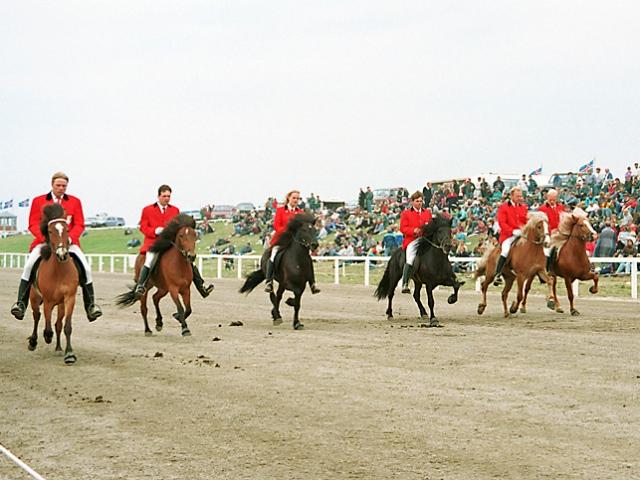 Afkvæmi Gassa á LM 1994